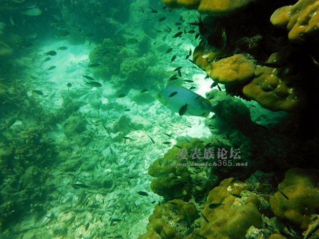 壁纸 海底 海底世界 海洋馆 水草 水生植物 水族馆 640_480