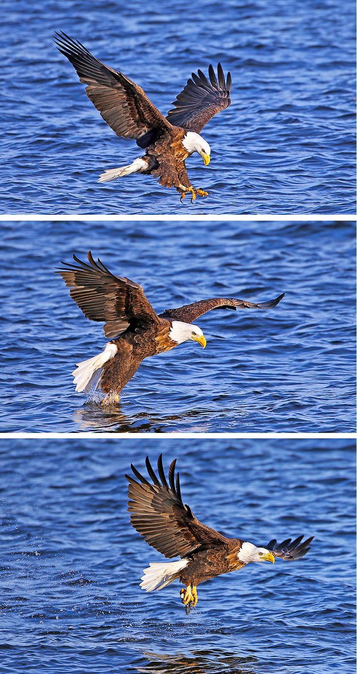 动物 鸟 鸟类 736