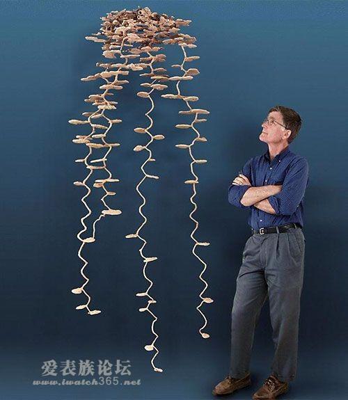 动物界建筑师 zz,港澳台分会
